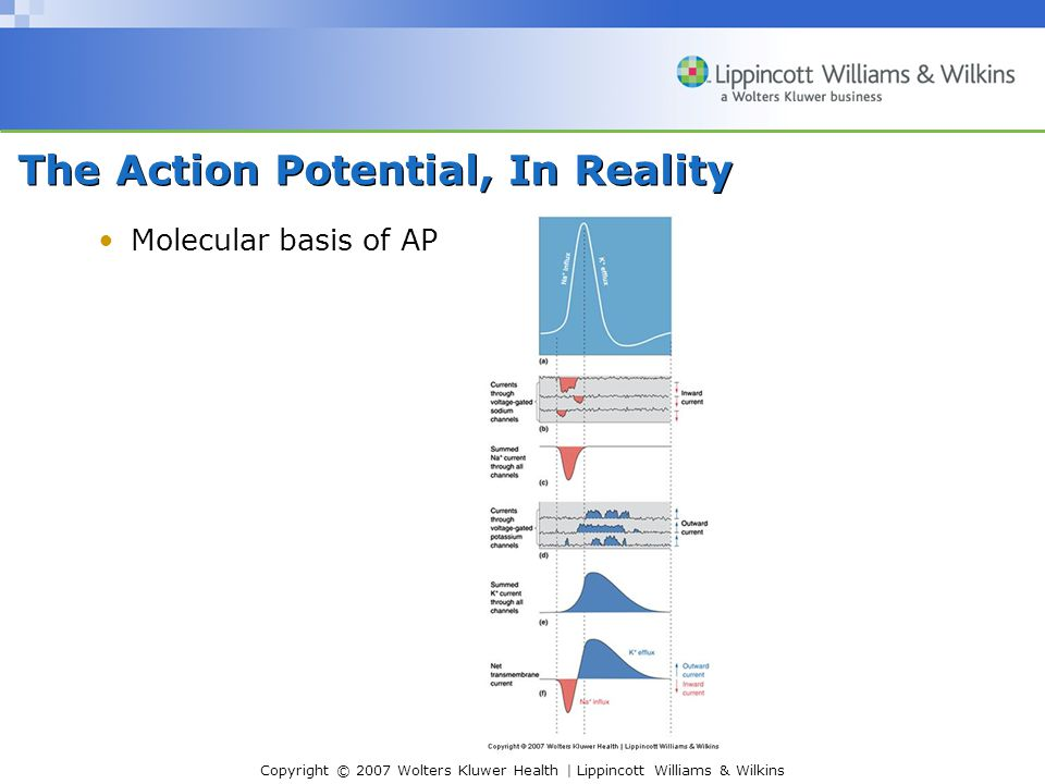 Copyright © 2007 Wolters Kluwer Health | Lippincott Williams & Wilkins The Action Potential, In Reality Molecular basis of AP