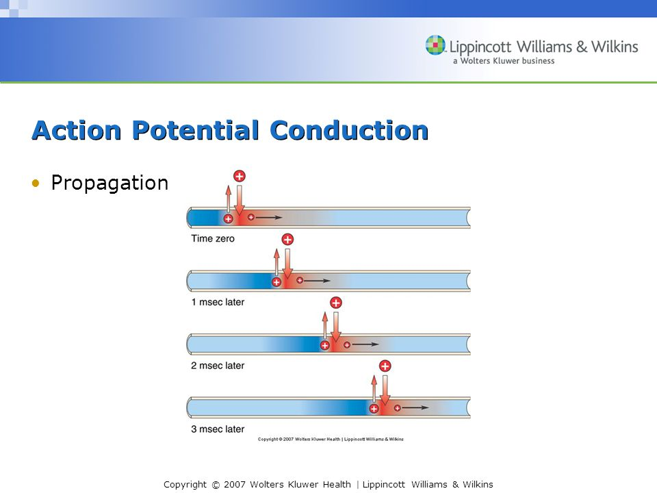 Copyright © 2007 Wolters Kluwer Health | Lippincott Williams & Wilkins Action Potential Conduction Propagation
