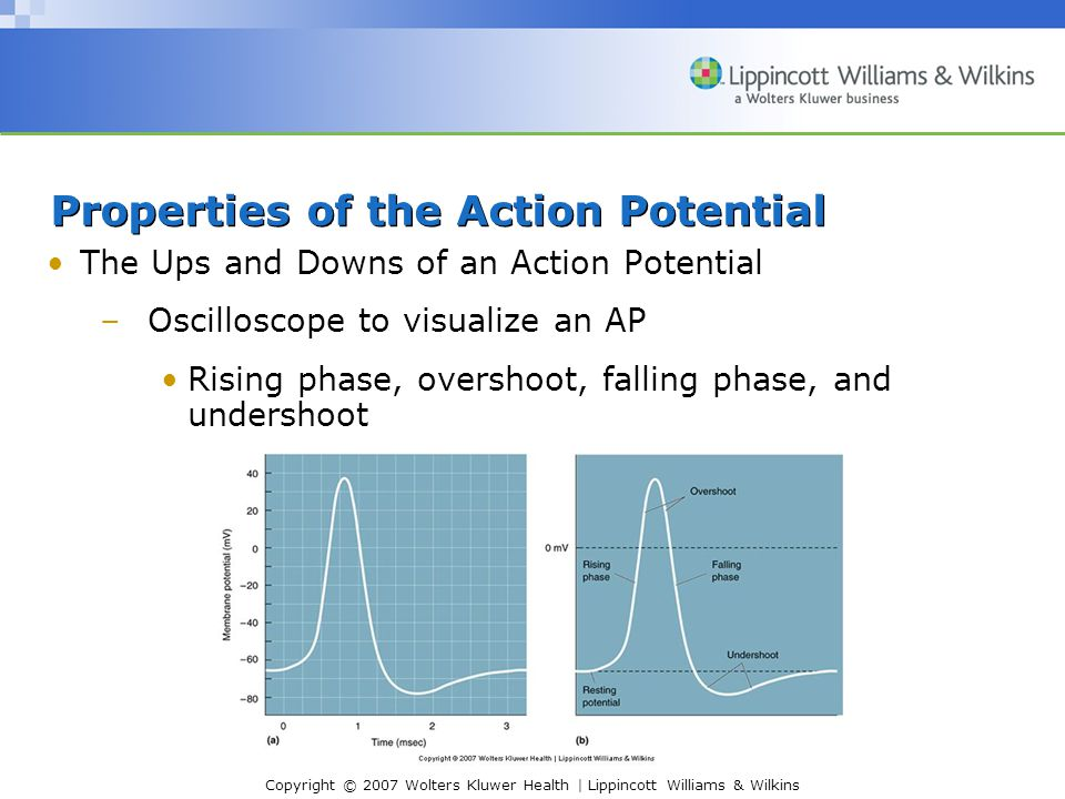 Copyright © 2007 Wolters Kluwer Health | Lippincott Williams & Wilkins Properties of the Action Potential The Ups and Downs of an Action Potential –Oscilloscope to visualize an AP Rising phase, overshoot, falling phase, and undershoot