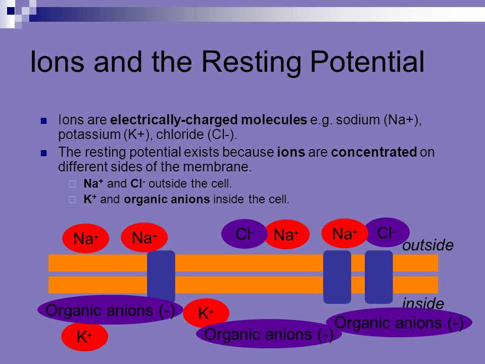 Ions and the Resting Potential Ions are electrically-charged molecules e.g. sodium (Na+), potassium (K+), chloride (Cl-). The resting potential exists