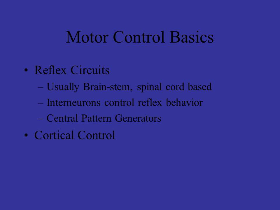 Motor Control Basics Reflex Circuits –Usually Brain-stem, spinal cord based –Interneurons control reflex behavior –Central Pattern Generators Cortical