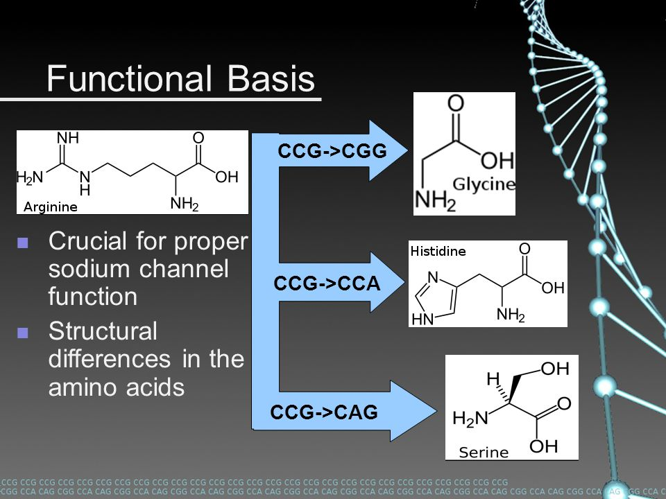 Functional Basis Crucial for proper sodium channel function Structural differences in the amino acids CCG->CGG CCG->CCA CCG->CAG