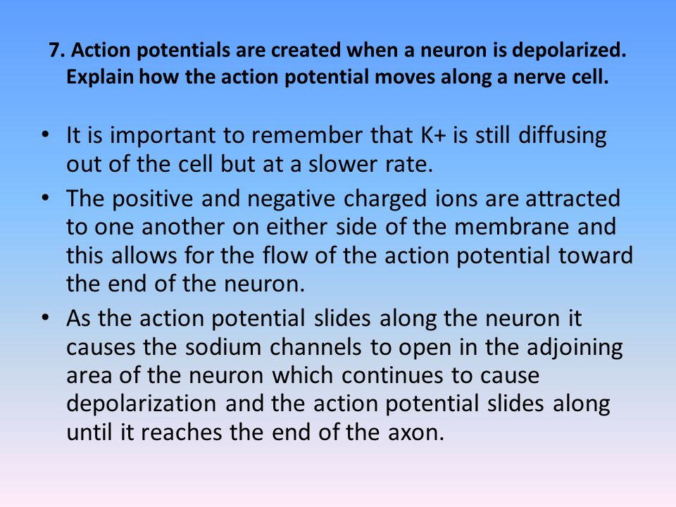7.Action potentials are created when a neuron is depolarized.