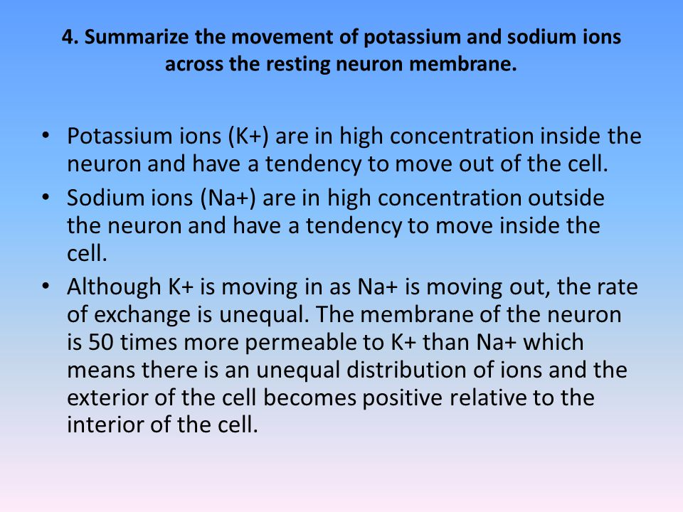 4.Summarize the movement of potassium and sodium ions across the resting neuron membrane.