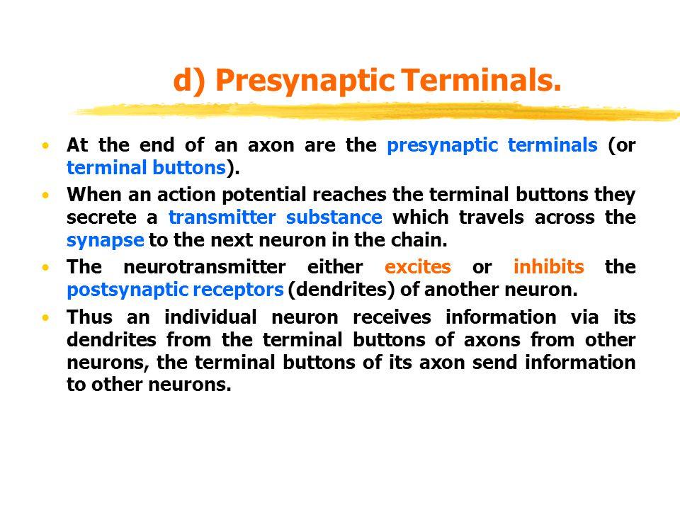 d) Presynaptic Terminals.