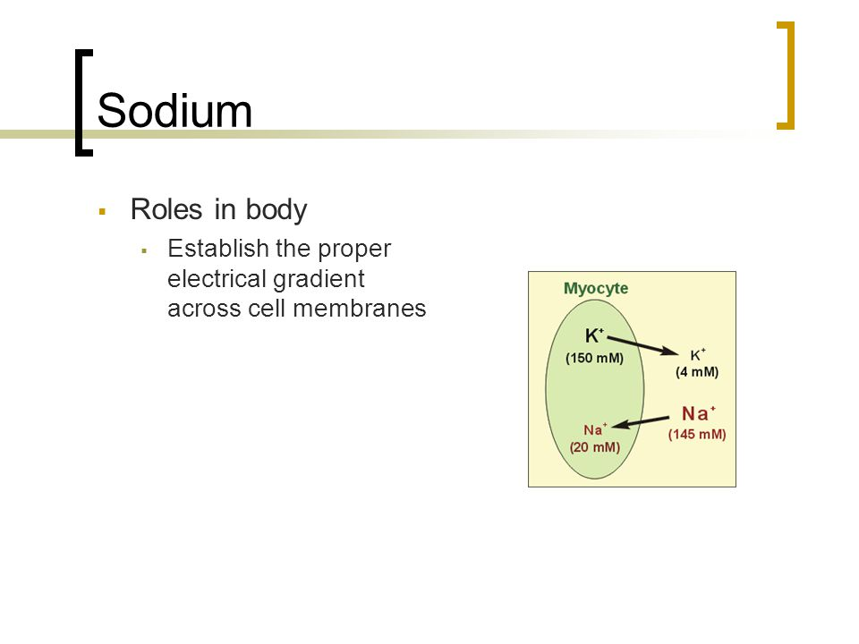 Sodium  Roles in body  Establish the proper electrical gradient across cell membranes