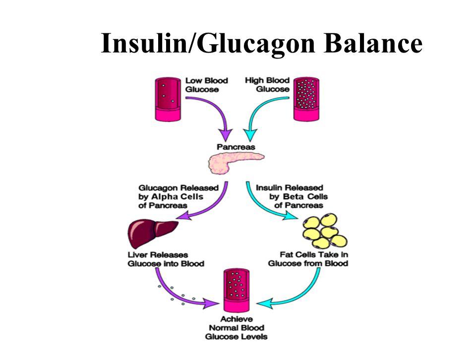 Insulin/Glucagon Balance