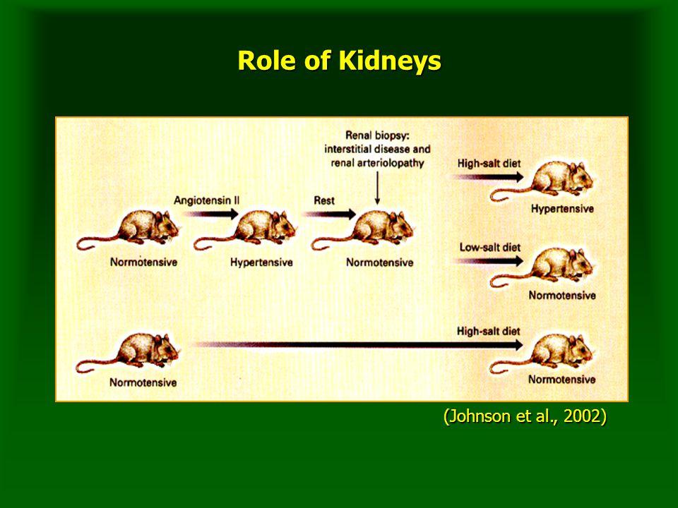 Role of Kidneys (Johnson et al., 2002)