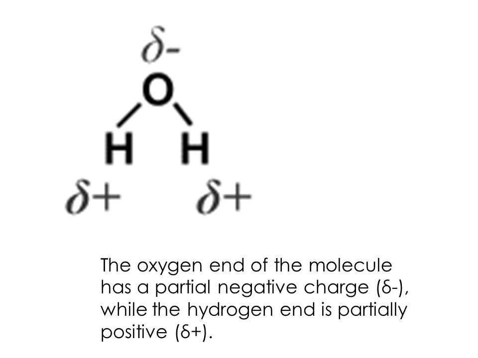 The oxygen end of the molecule has a partial negative charge (δ-), while the hydrogen end is partially positive (δ+).