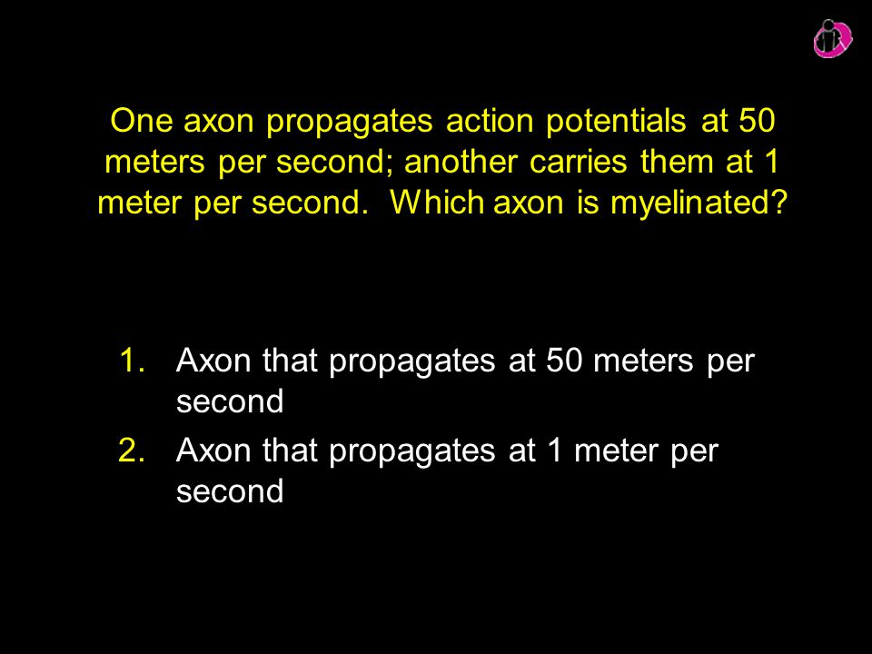 One axon propagates action potentials at 50 meters per second; another carries them at 1 meter per second. Which axon is myelinated? 1.Axon that propa
