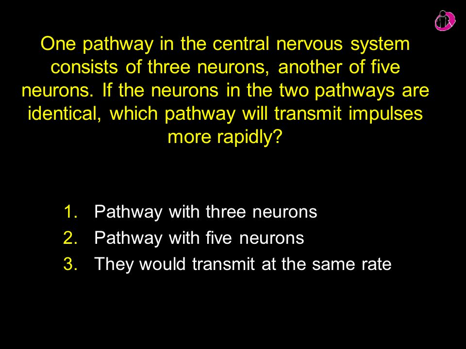 One pathway in the central nervous system consists of three neurons, another of five neurons. If the neurons in the two pathways are identical, which