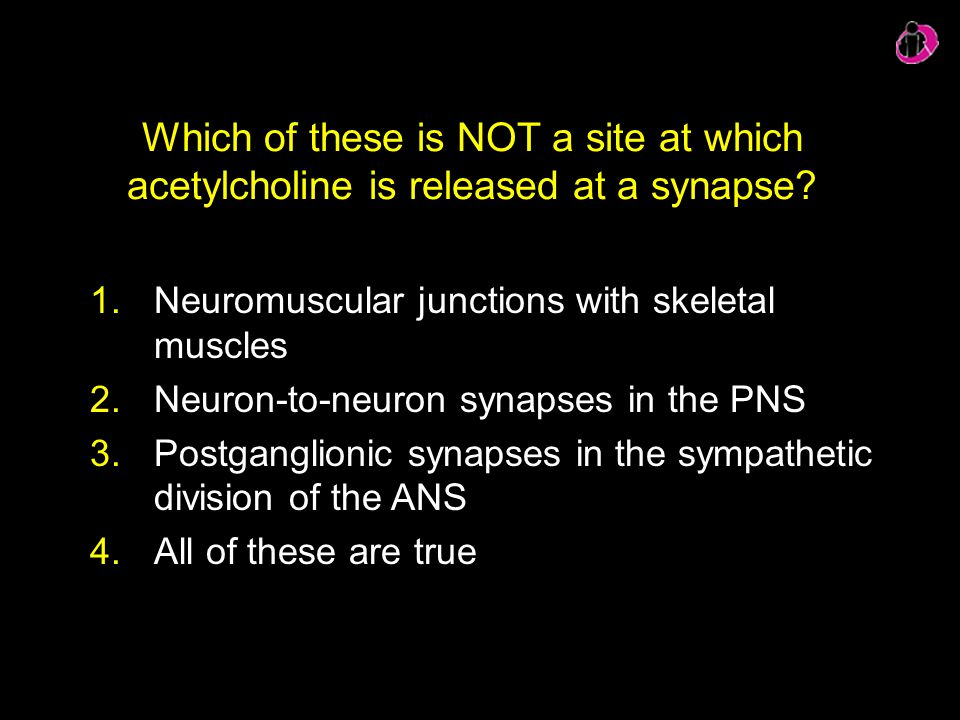 Which of these is NOT a site at which acetylcholine is released at a synapse? 1.Neuromuscular junctions with skeletal muscles 2.Neuron-to-neuron synap