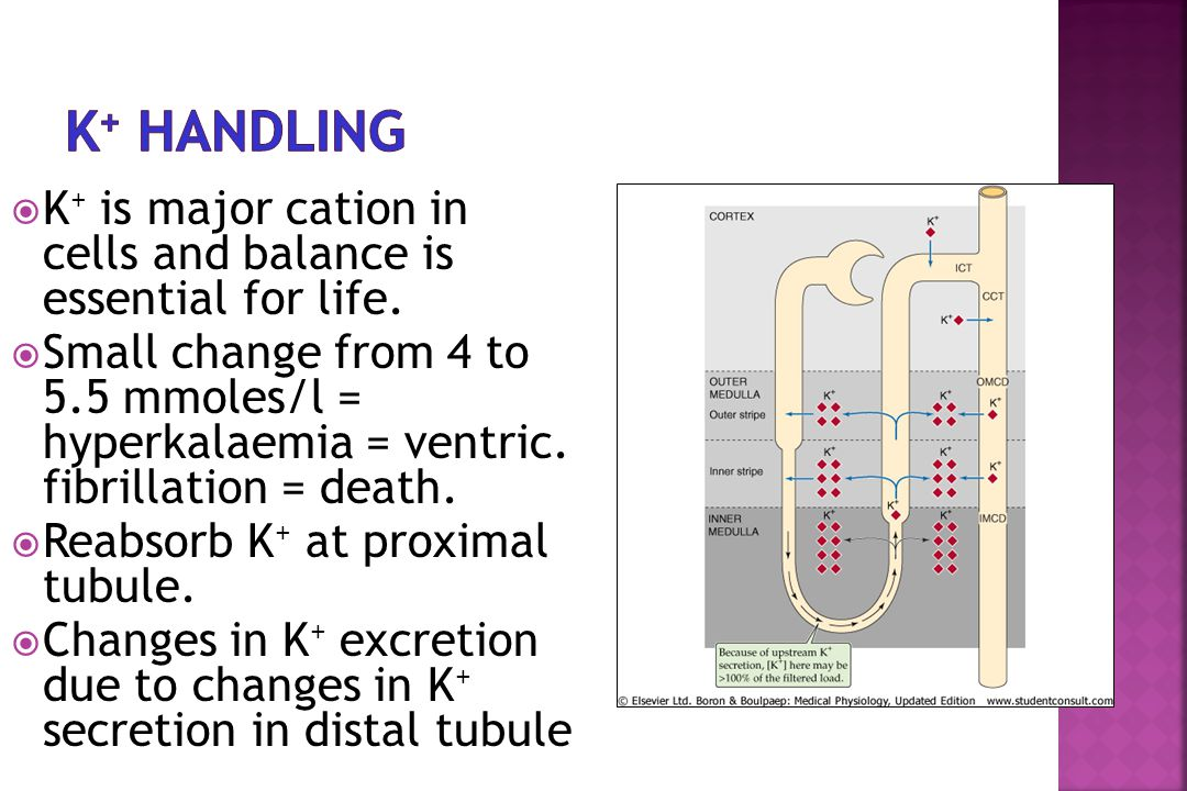  K + is major cation in cells and balance is essential for life.