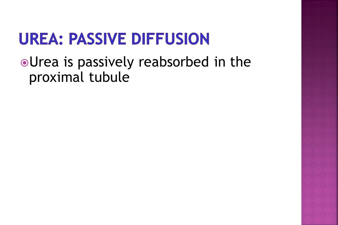  Urea is passively reabsorbed in the proximal tubule