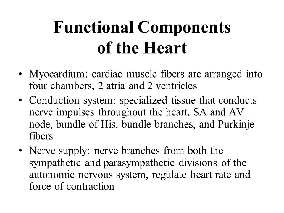 Functional Components of the Heart Myocardium: cardiac muscle fibers are arranged into four chambers, 2 atria and 2 ventricles Conduction system: spec