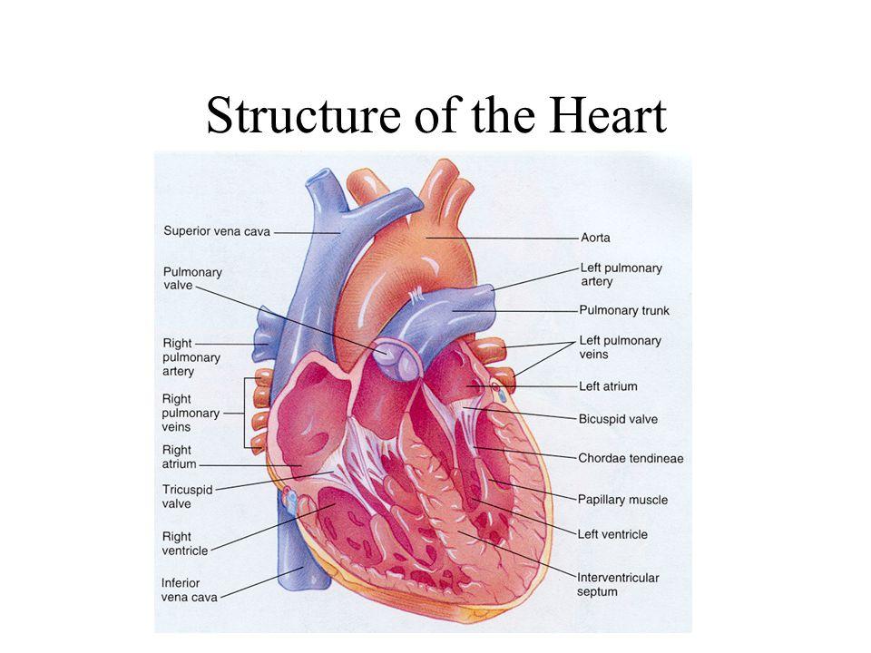 Normal electrocardiogram at rest