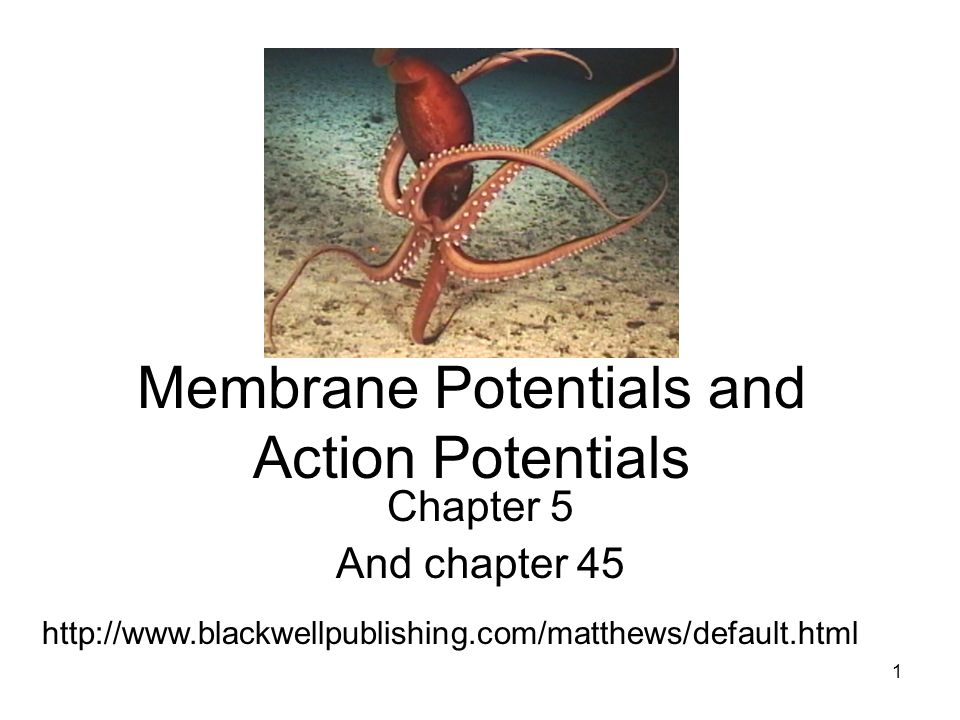1 Membrane Potentials and Action Potentials Chapter 5 And chapter 45 http://www.blackwellpublishing.com/matthews/default.html