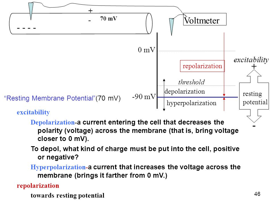 46 0 mV hyperpolarization depolarization repolarization threshold resting potential -90 mV + -excitability excitability Depolarization- a current entering the cell that decreases the polarity (voltage) across the membrane (that is, bring voltage closer to 0 mV).