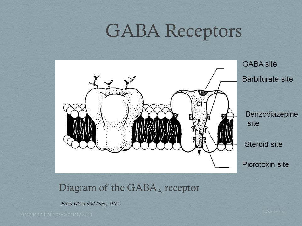GABA Receptors Diagram of the GABA A receptor From Olsen and Sapp, 1995 P-Slide 18 GABA site Barbiturate site Benzodiazepine site Steroid site Picroto