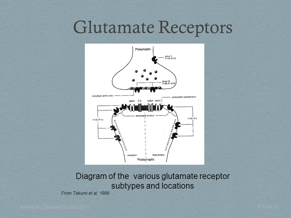 Glutamate Receptors P-Slide 21 Diagram of the various glutamate receptor subtypes and locations From Takumi et al, 1998 American Epilepsy Society 2011