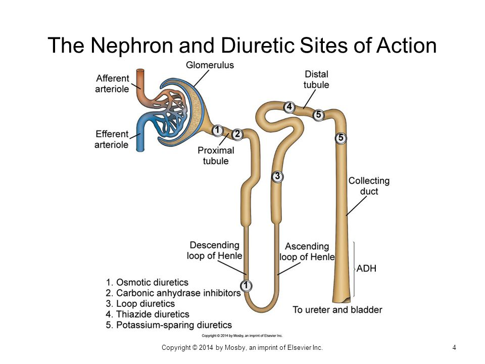  Lowered peripheral vascular resistance  Depletion of sodium and water (and potassium) Thiazide and Thiazide-like Diuretics: Drug Effects 35Copyright © 2014 by Mosby, an imprint of Elsevier Inc.