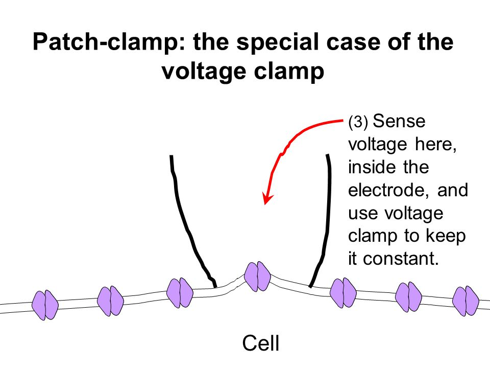 Cell (3) Sense voltage here, inside the electrode, and use voltage clamp to keep it constant. Patch-clamp: the special case of the voltage clamp