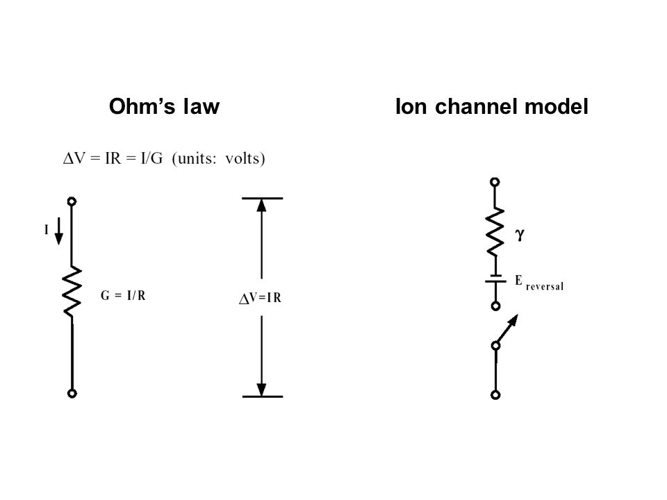 Ohm's lawIon channel model