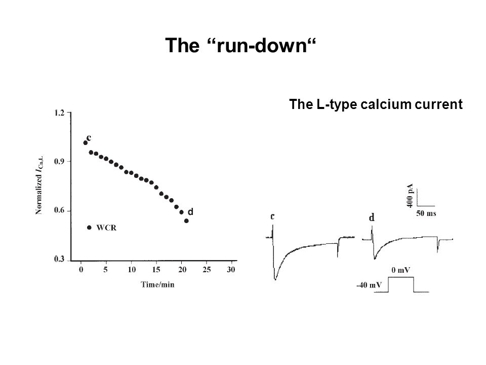 "The L-type calcium current The ""run-down"""
