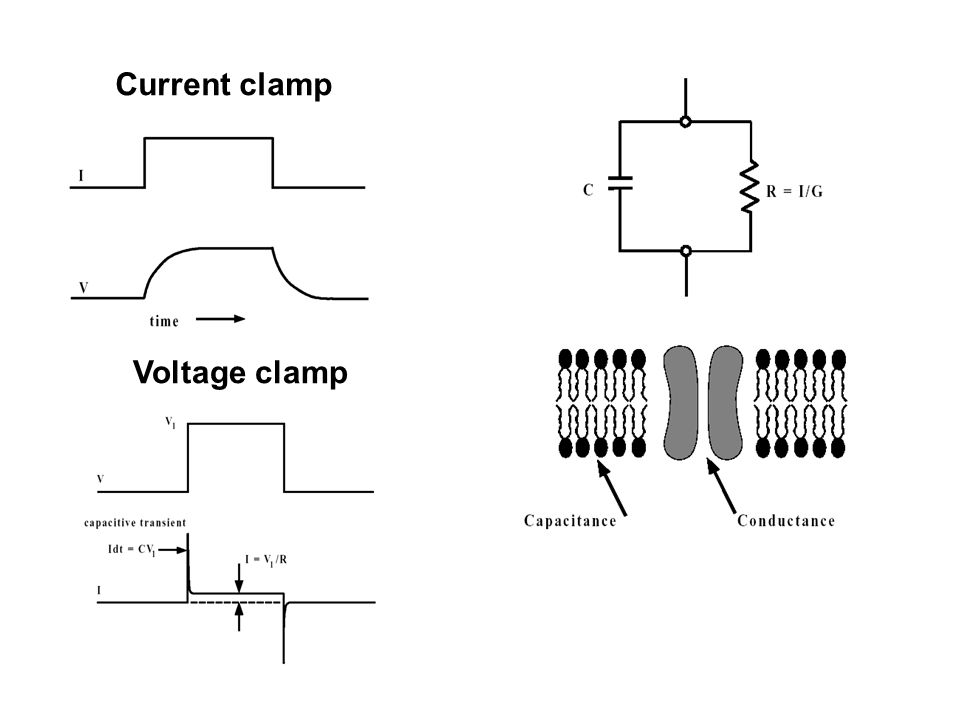 Current clamp Voltage clamp