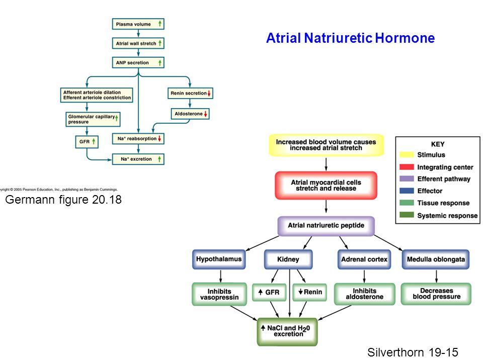 Germann figure 20.18 Silverthorn 19-15 Atrial Natriuretic Hormone