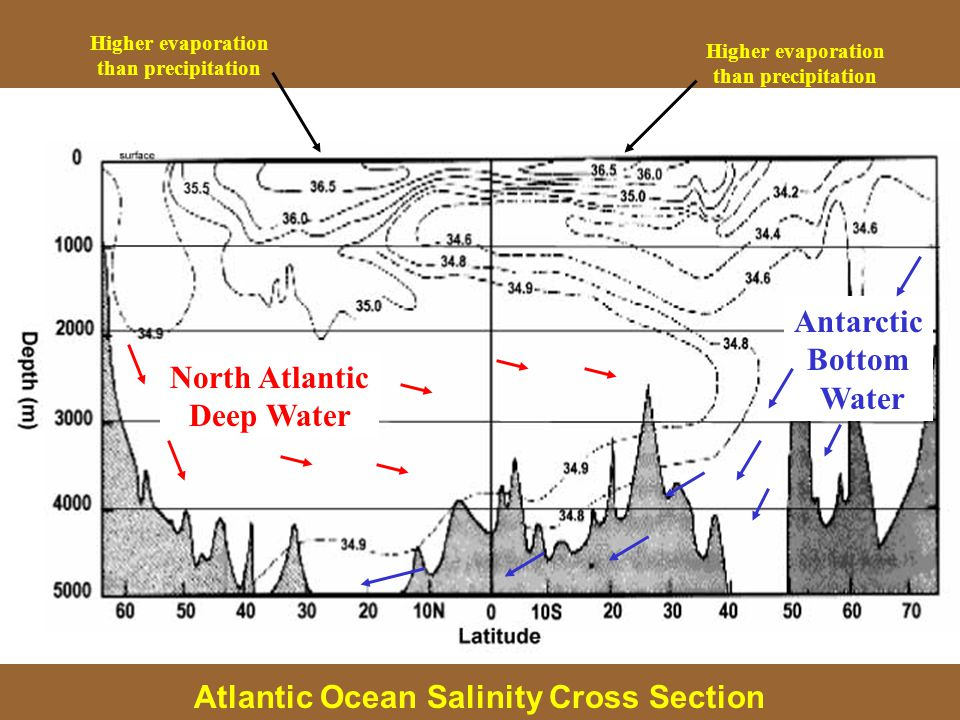 North Atlantic Deep Water Antarctic Bottom Water Higher evaporation than precipitation Higher evaporation than precipitation Atlantic Ocean Salinity Cross Section