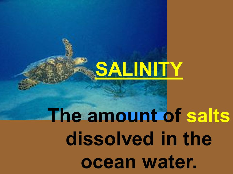 SALINITY The amount of salts dissolved in the ocean water.