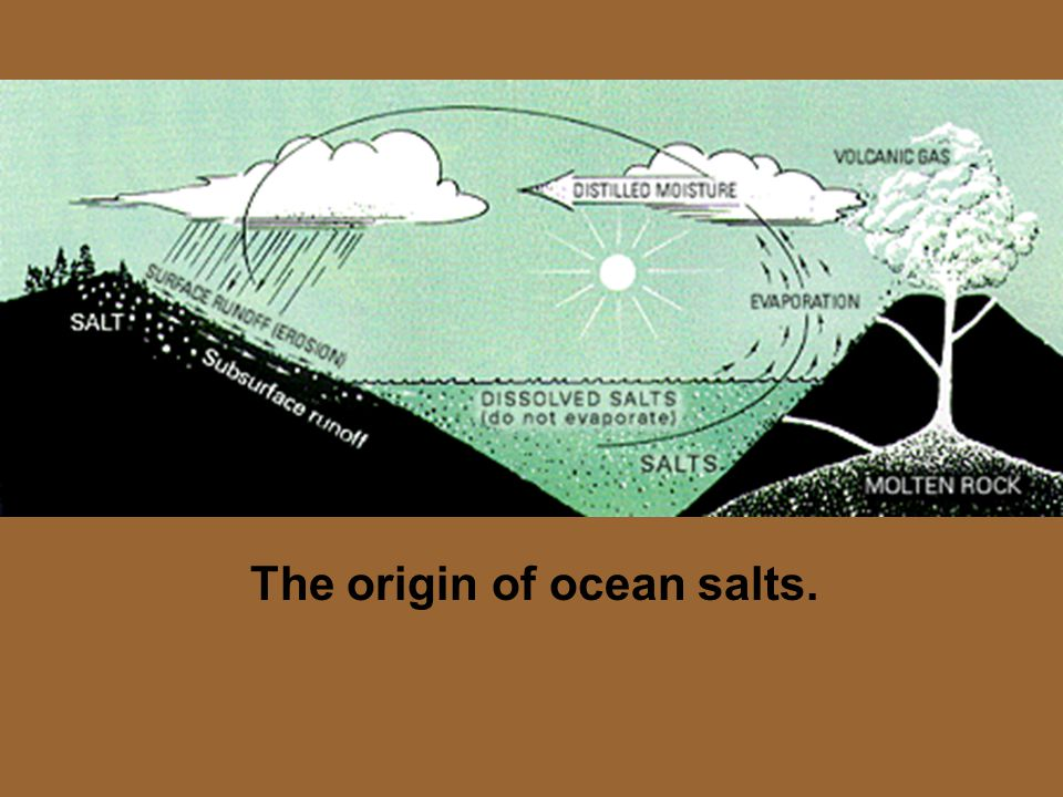 The origin of ocean salts.