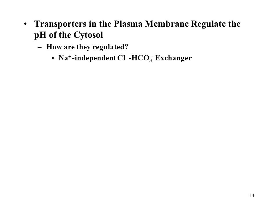 Transporters in the Plasma Membrane Regulate the pH of the Cytosol –How are they regulated.