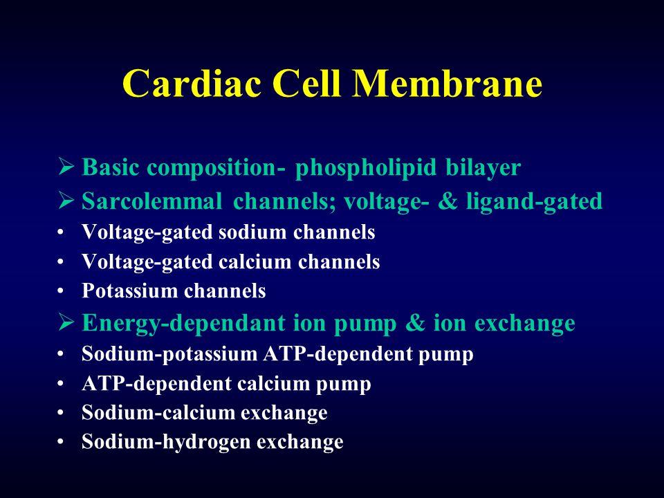 Cardiac Cell Membrane  Basic composition- phospholipid bilayer  Sarcolemmal channels; voltage- & ligand-gated Voltage-gated sodium channels Voltage-