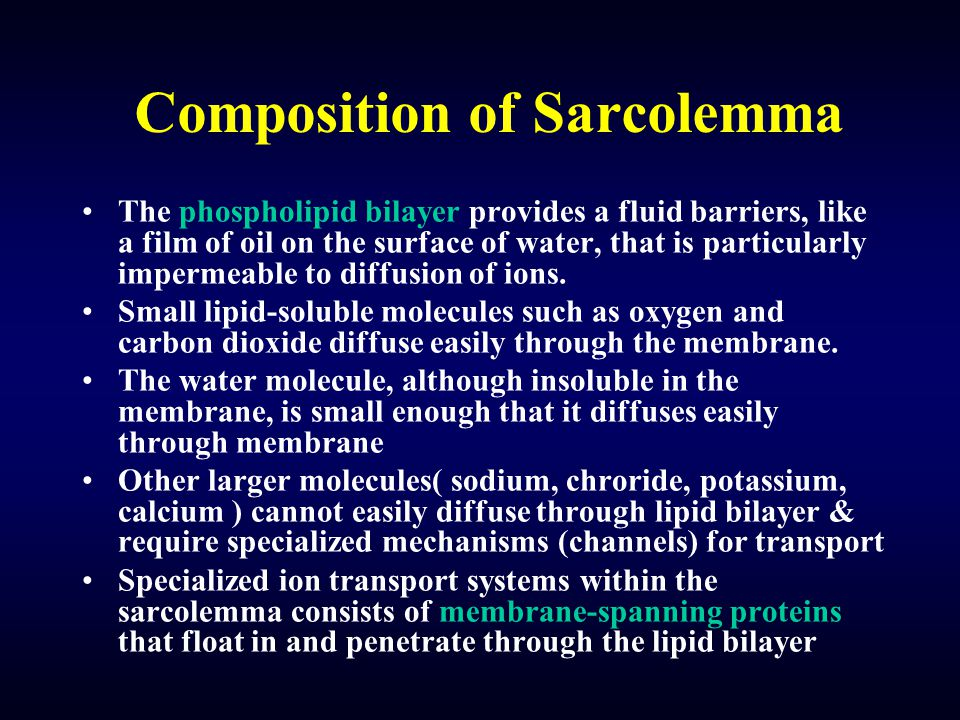 Composition of Sarcolemma The phospholipid bilayer provides a fluid barriers, like a film of oil on the surface of water, that is particularly imperme