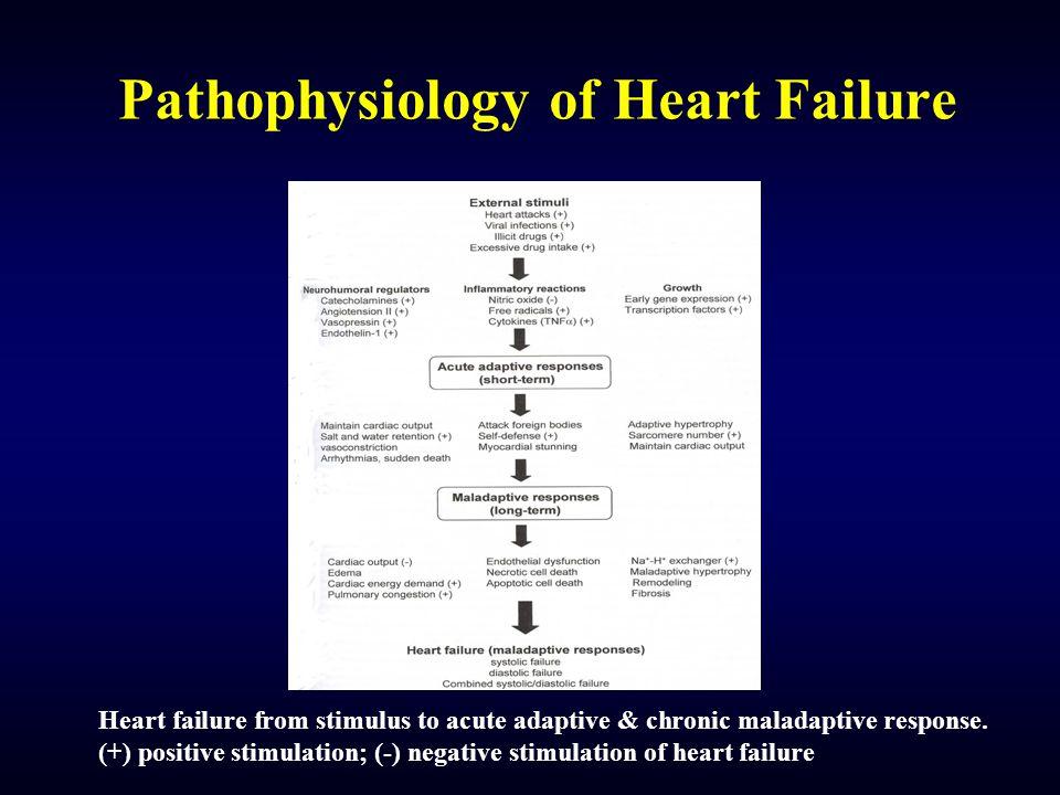 Pathophysiology of Heart Failure Heart failure from stimulus to acute adaptive & chronic maladaptive response. (+) positive stimulation; (-) negative