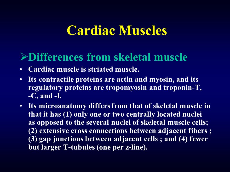 Cardiac Muscles  Differences from skeletal muscle Cardiac muscle is striated muscle.