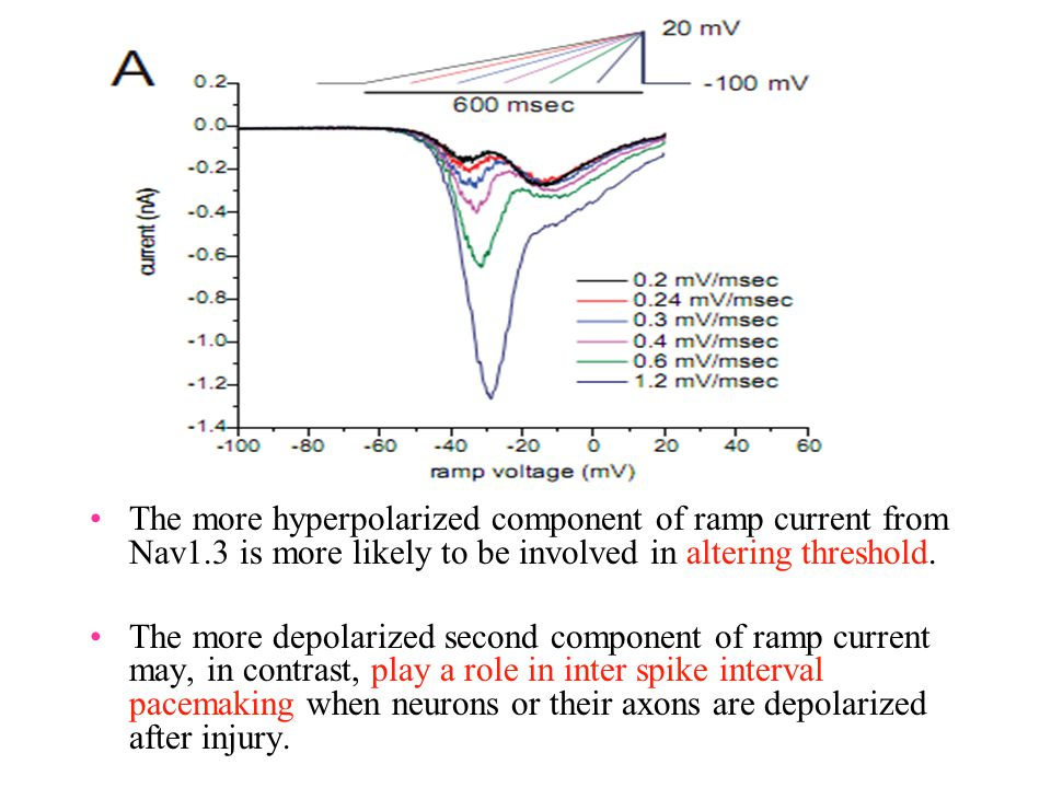 The more hyperpolarized component of ramp current from Nav1.3 is more likely to be involved in altering threshold. The more depolarized second compone