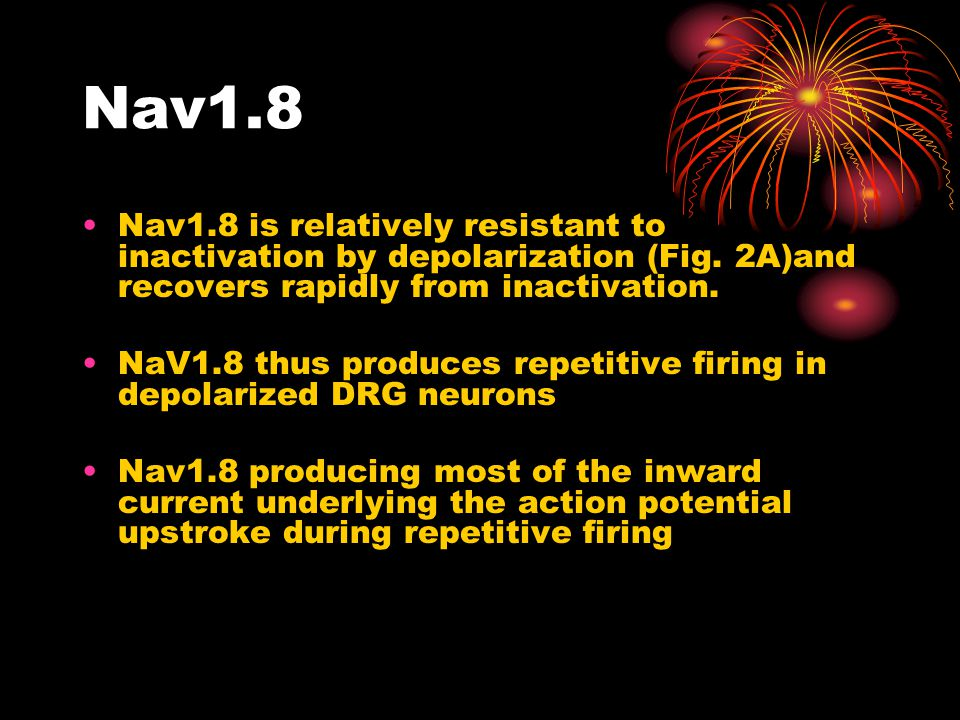 Nav1.8 Nav1.8 is relatively resistant to inactivation by depolarization (Fig. 2A)and recovers rapidly from inactivation. NaV1.8 thus produces repetiti
