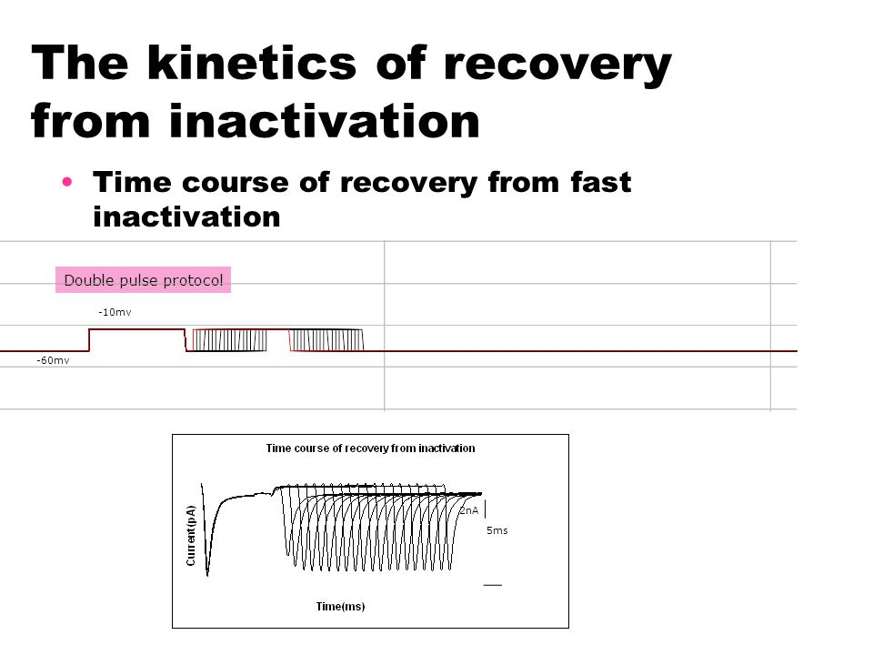 The kinetics of recovery from inactivation Time course of recovery from fast inactivation 5ms 2nA -60mv -10mv Double pulse protocol