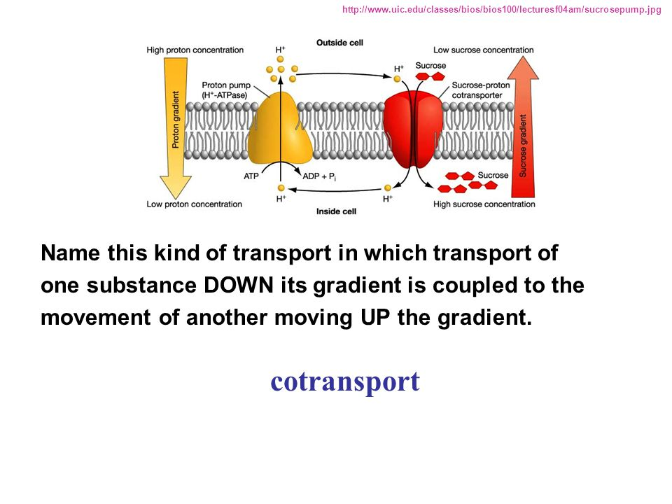 Name this kind of transport in which transport of one substance DOWN its gradient is coupled to the movement of another moving UP the gradient. cotran
