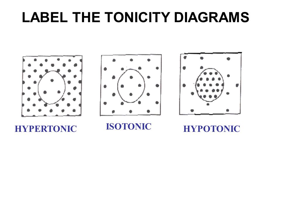 LABEL THE TONICITY DIAGRAMS HYPERTONICHYPOTONIC ISOTONIC