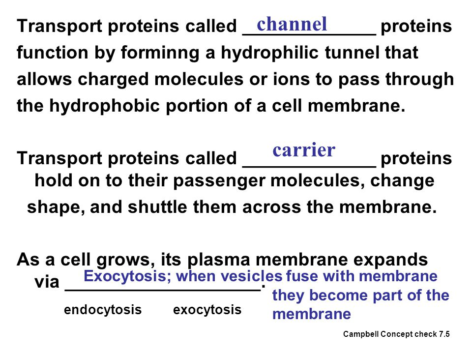 Transport proteins called _____________ proteins function by forminng a hydrophilic tunnel that allows charged molecules or ions to pass through the h