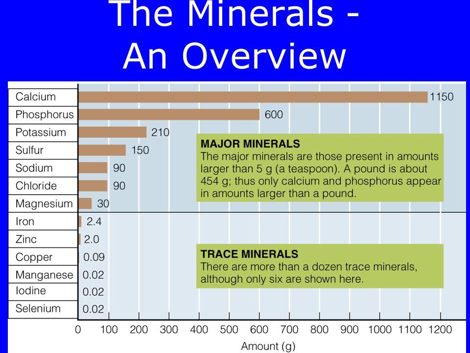 The Minerals Major minerals –Calcium –Chloride –Magnesium –Phosphorus –Potassium –Sodium –Sulfur Trace Minerals –Chromium –Copper –Fluoride –Iodine –I