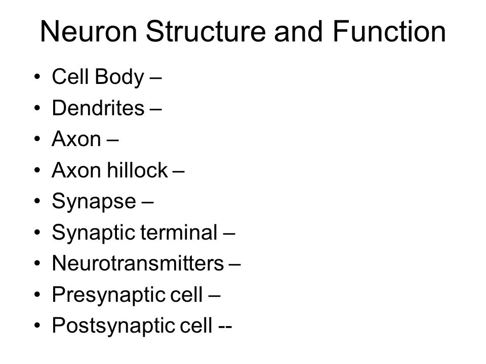 Information Processing Sensory neurons – Interneurons – Motor neurons – Central vs. Peripheral NS --