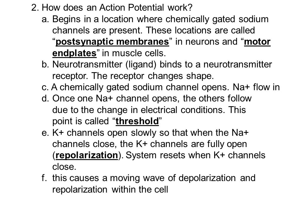 "E. This ""depolarization"" (opening Sodium gates) and ""repolarization (opening Potassium gates) is called an action potential. 1. What signals a cell to"