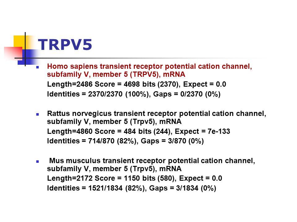 TRPV5 Homo sapiens transient receptor potential cation channel, subfamily V, member 5 (TRPV5), mRNA Length=2486 Score = 4698 bits (2370), Expect = 0.0 Identities = 2370/2370 (100%), Gaps = 0/2370 (0%) Rattus norvegicus transient receptor potential cation channel, subfamily V, member 5 (Trpv5), mRNA Length=4860 Score = 484 bits (244), Expect = 7e-133 Identities = 714/870 (82%), Gaps = 3/870 (0%) Mus musculus transient receptor potential cation channel, subfamily V, member 5 (Trpv5), mRNA Length=2172 Score = 1150 bits (580), Expect = 0.0 Identities = 1521/1834 (82%), Gaps = 3/1834 (0%)