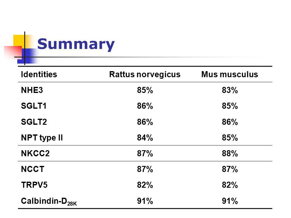 Summary IdentitiesRattus norvegicusMus musculus NHE385%83% SGLT186%85% SGLT286% NPT type II84%85% NKCC287%88% NCCT87% TRPV582% Calbindin-D 28K 91%