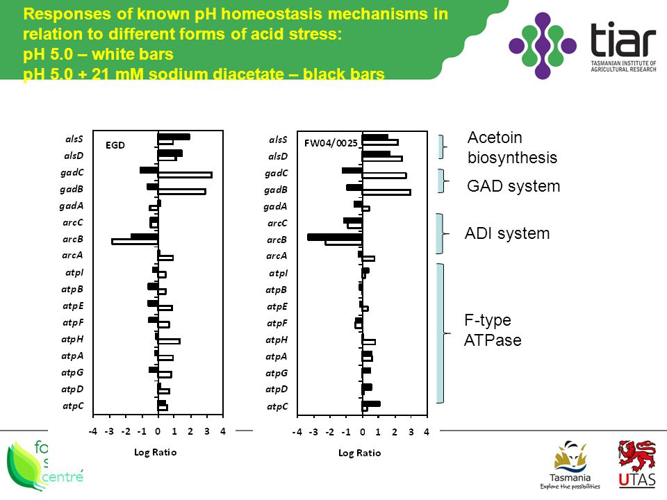 Responses of known pH homeostasis mechanisms in relation to different forms of acid stress: pH 5.0 – white bars pH 5.0 + 21 mM sodium diacetate – black bars Acetoin biosynthesis GAD system ADI system F-type ATPase